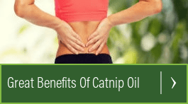 how to use catnip essential oil